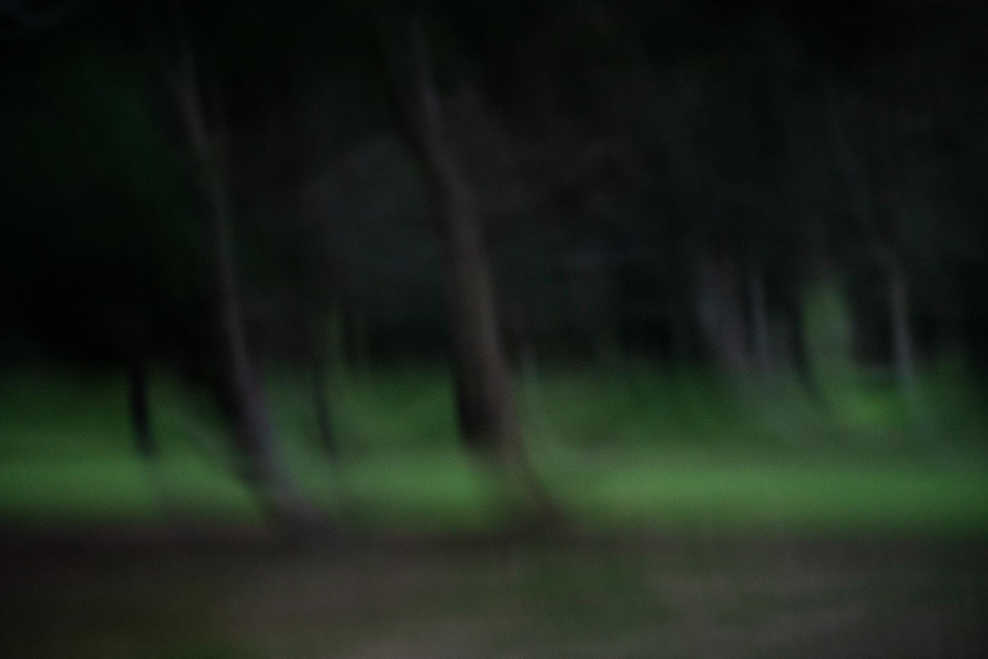 Dusk in the park