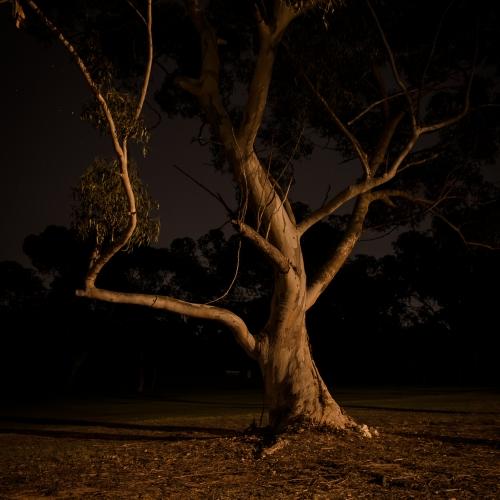 Nightfall in the park